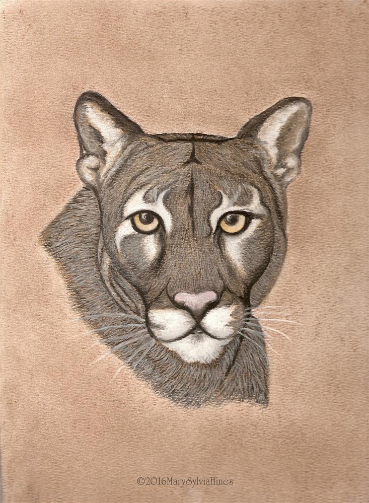 """Cougar !"" original fine art by Mary Sylvia Hines"