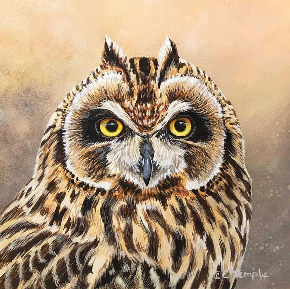 """Short-eared Owl"" original fine art by Catherine Temple"