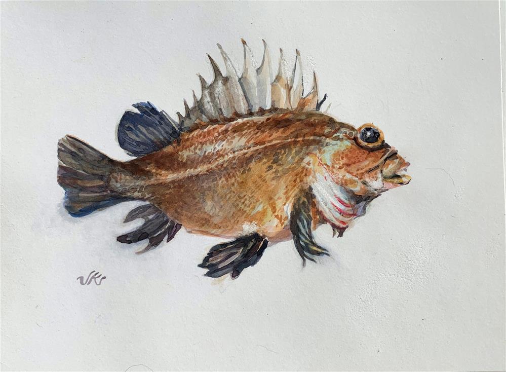 """""""Quillback Rockfish"""" original fine art by Jean Krueger"""