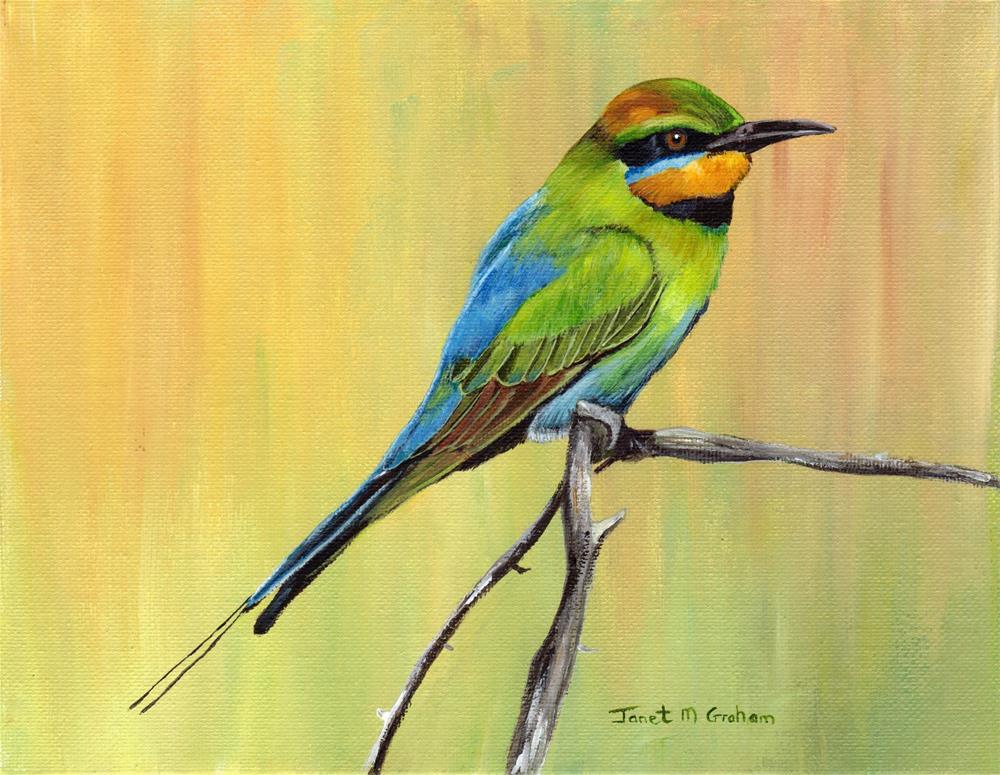 """Rainbow Bee-Eater"" original fine art by Janet Graham"