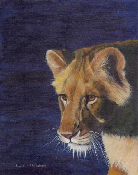 """Lioness"" original fine art by Janet Graham"