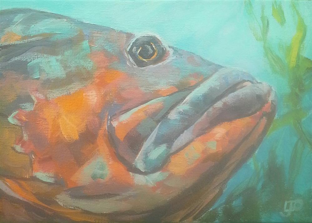"""""""Grumpy Groper"""" original fine art by Leanne Owen"""