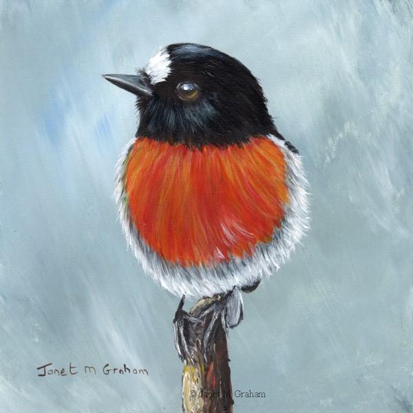 """Scarlet Robin No 13"" original fine art by Janet Graham"
