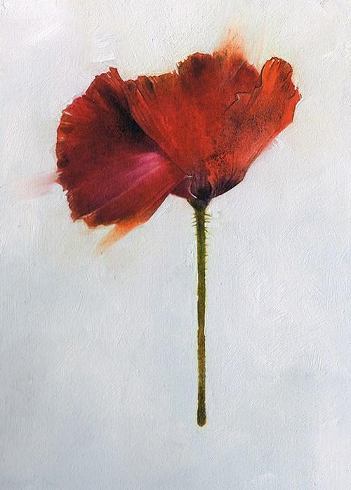 """Poppy Study Pay What You Want"" original fine art by April Aldridge"