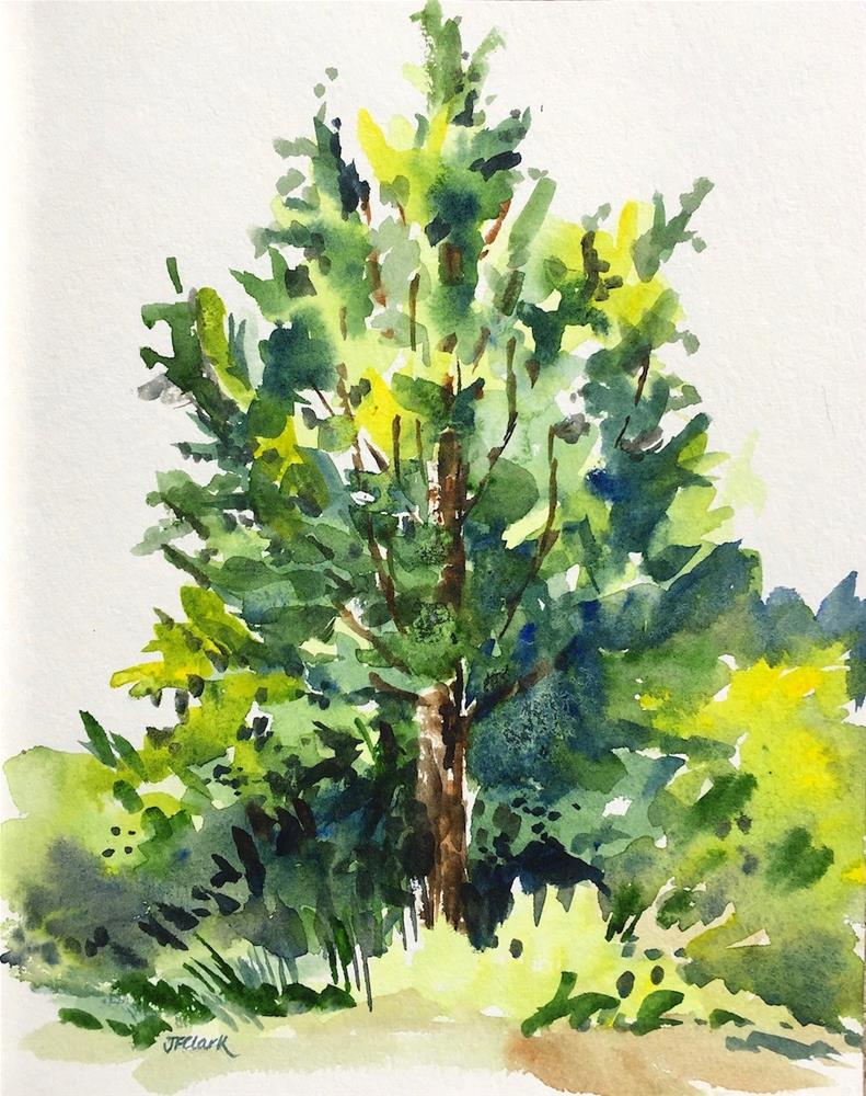 """Tree, study"" original fine art by Judith Freeman Clark"