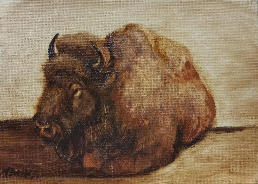 """Buffalo laying down-study"" original fine art by Veronica Brown"