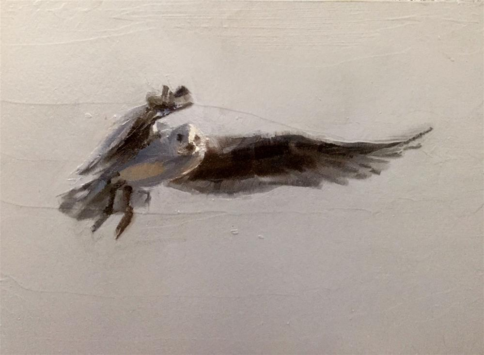 """Gull in Flight"" original fine art by Gary Bruton"