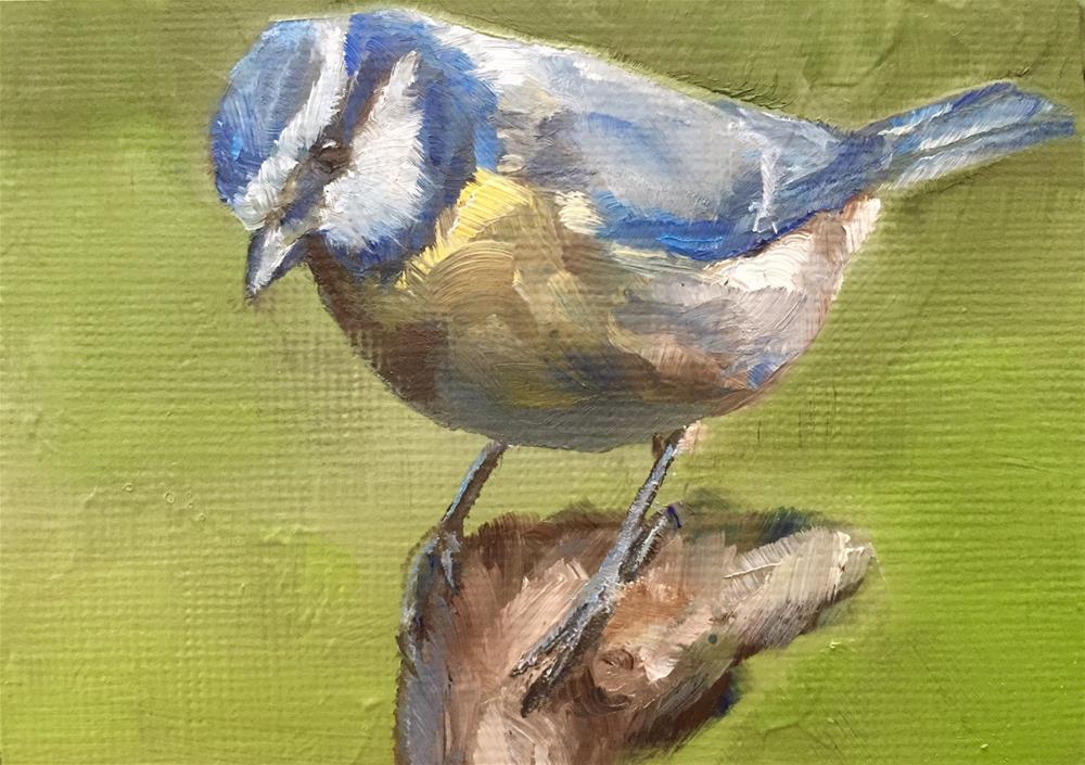 """Blue Tit"" original fine art by Gary Bruton"