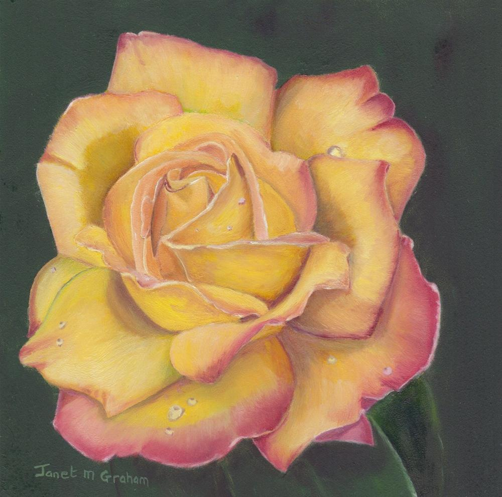 """Peace Rose"" original fine art by Janet Graham"