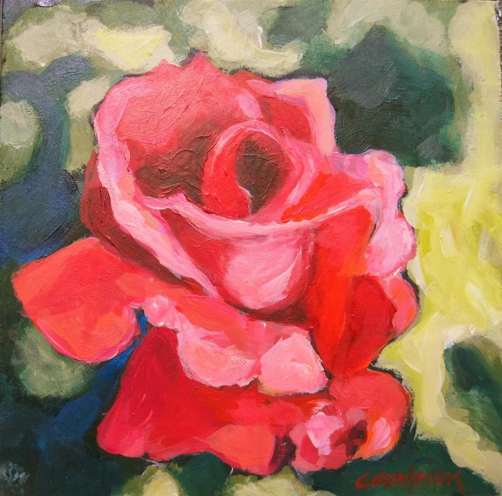 """169 Coral Rose"" original fine art by Diane Campion"