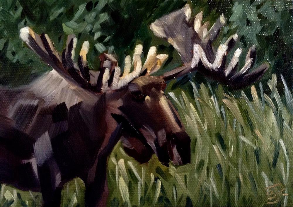 """Bull Moose"" original fine art by Bobbie Cook"