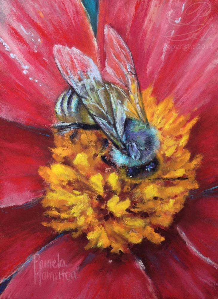 """Honey Bee"" original fine art by Pamela Hamilton"