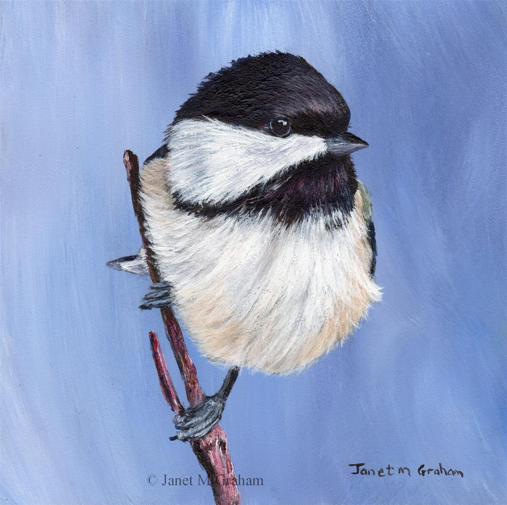 """Black Capped Chickadee No 2"" original fine art by Janet Graham"