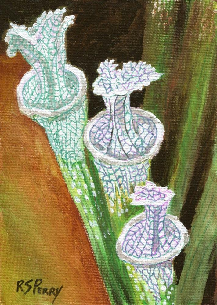 """Sarracenia Leucophylla "" original fine art by R. S. Perry"