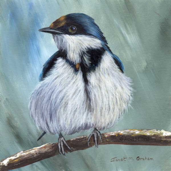 """White Throated Sparrow"" original fine art by Janet Graham"
