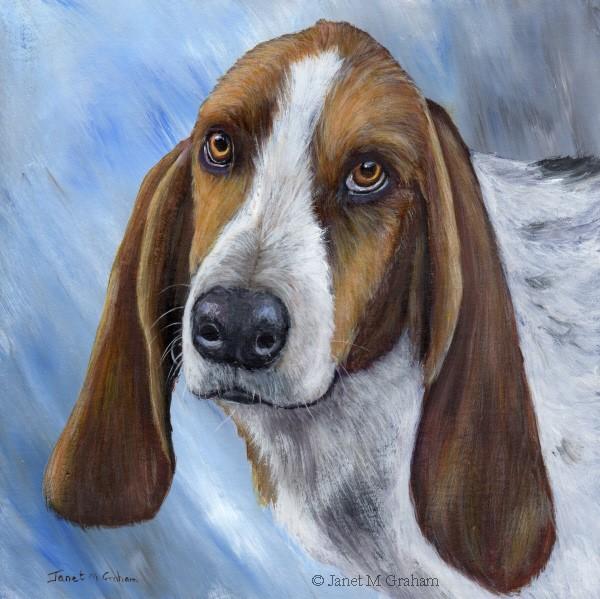 """""""Basset Hound"""" original fine art by Janet Graham"""