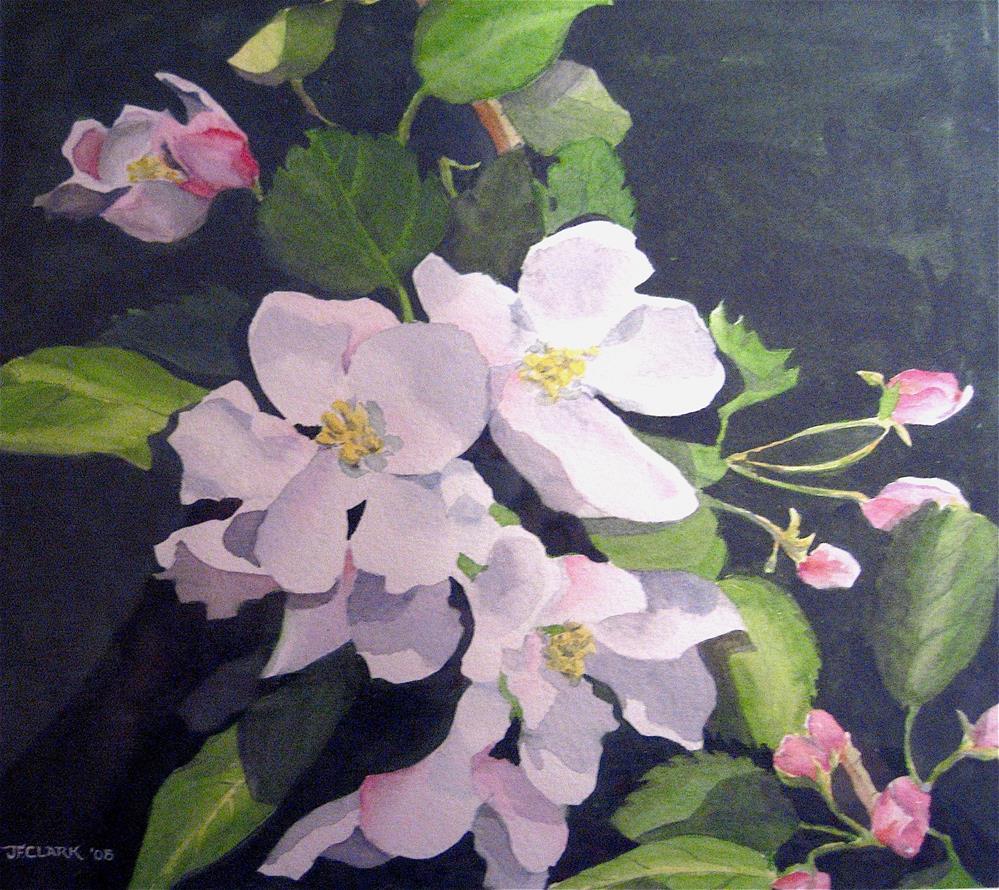 """Apple Blossoms, study"" original fine art by Judith Freeman Clark"