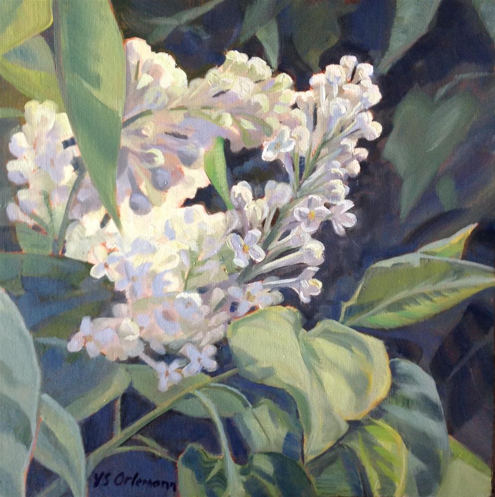 """White Lilacs"" original fine art by Valerie Orlemann"