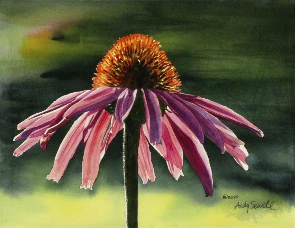 """""""Echinacea"""" original fine art by Andy Sewell"""