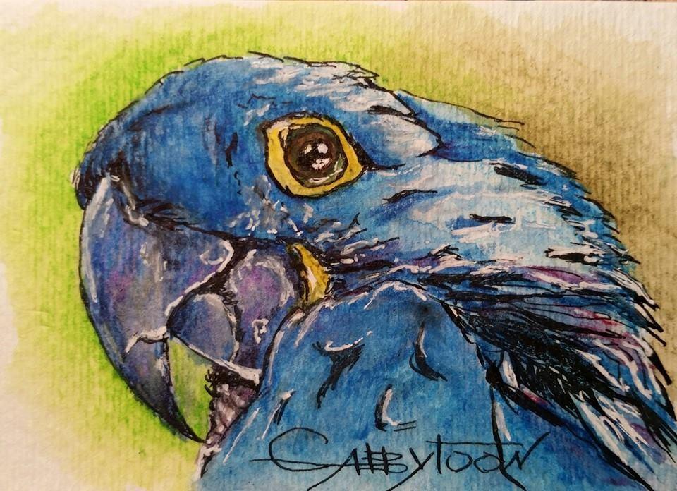 """Parrot (ACEO)"" original fine art by Gabriella DeLamater"