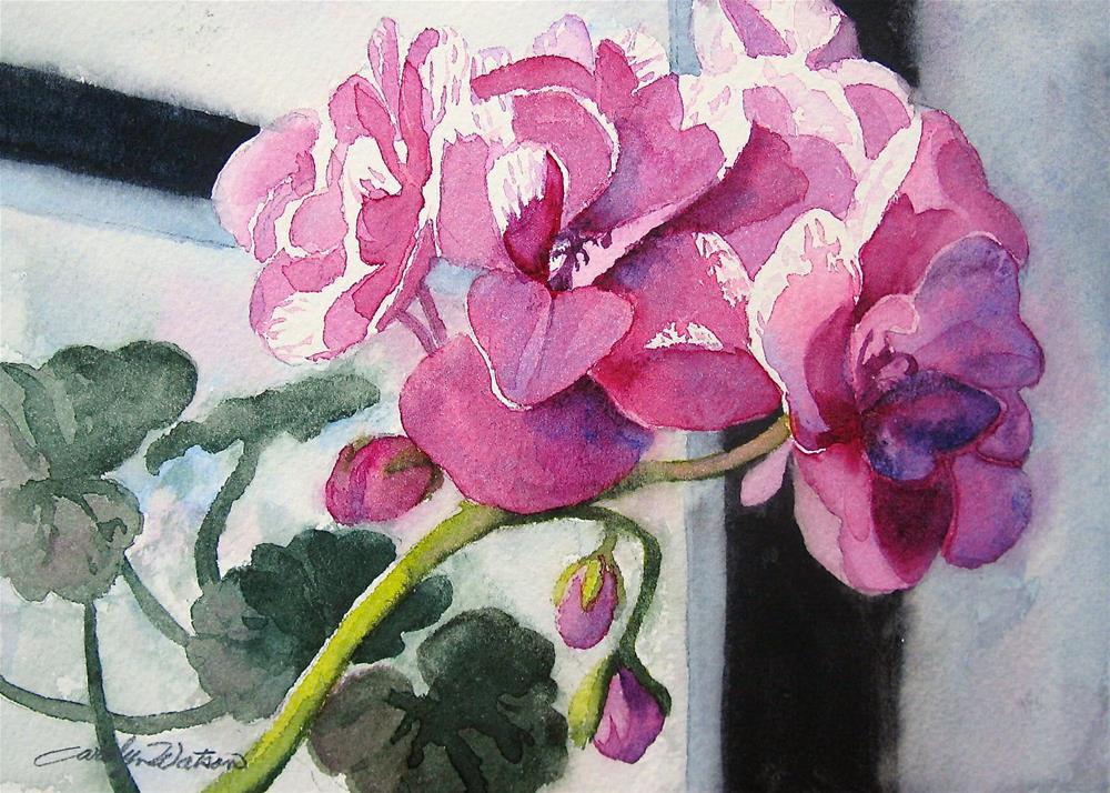 """Window Geranium"" original fine art by carolyn watson"
