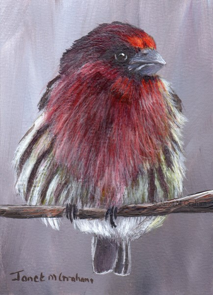 """House Finch ACEO"" original fine art by Janet Graham"