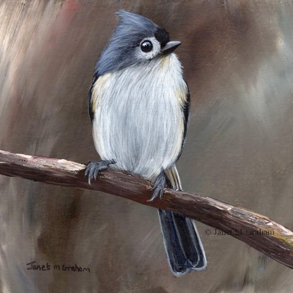 """Tufted Titmouse No 14"" original fine art by Janet Graham"