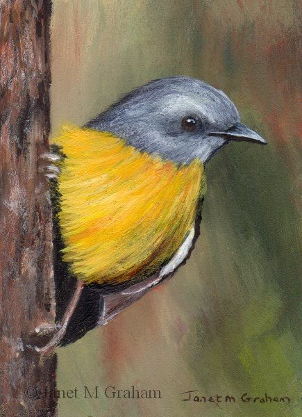 """""""Eastern Yellow Robin ACEO"""" original fine art by Janet Graham"""