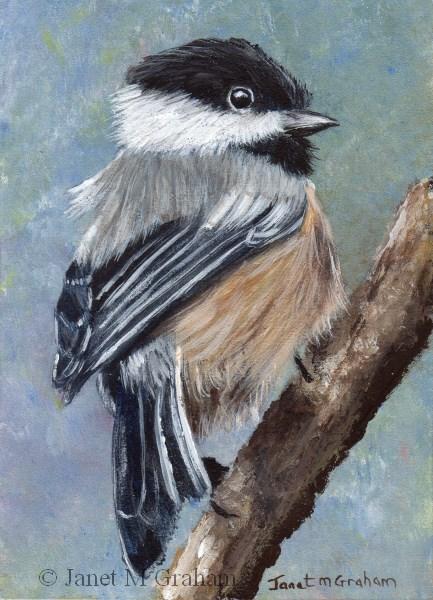 """Black Capped Chickadee ACEO"" original fine art by Janet Graham"