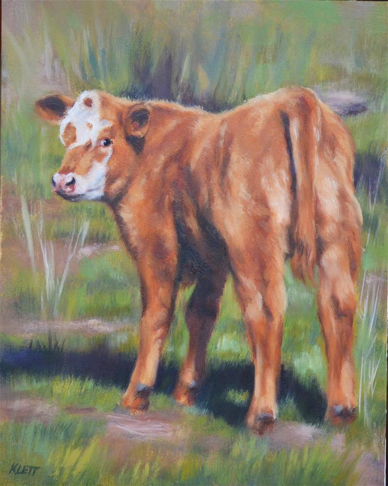"""Bull calf"" original fine art by Tracy Klett"