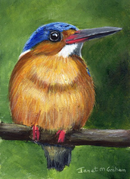 """Malagasy Kingfisher ACEO"" original fine art by Janet Graham"