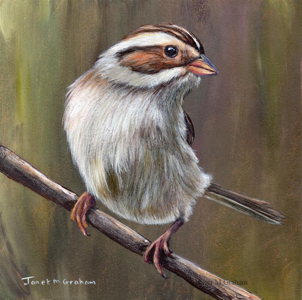 """Clay Coloured Sparrow"" original fine art by Janet Graham"