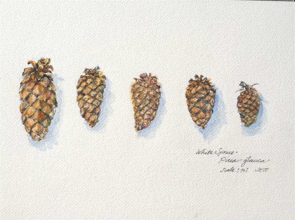 """White Spruce -Five Cones"" original fine art by Jean Krueger"