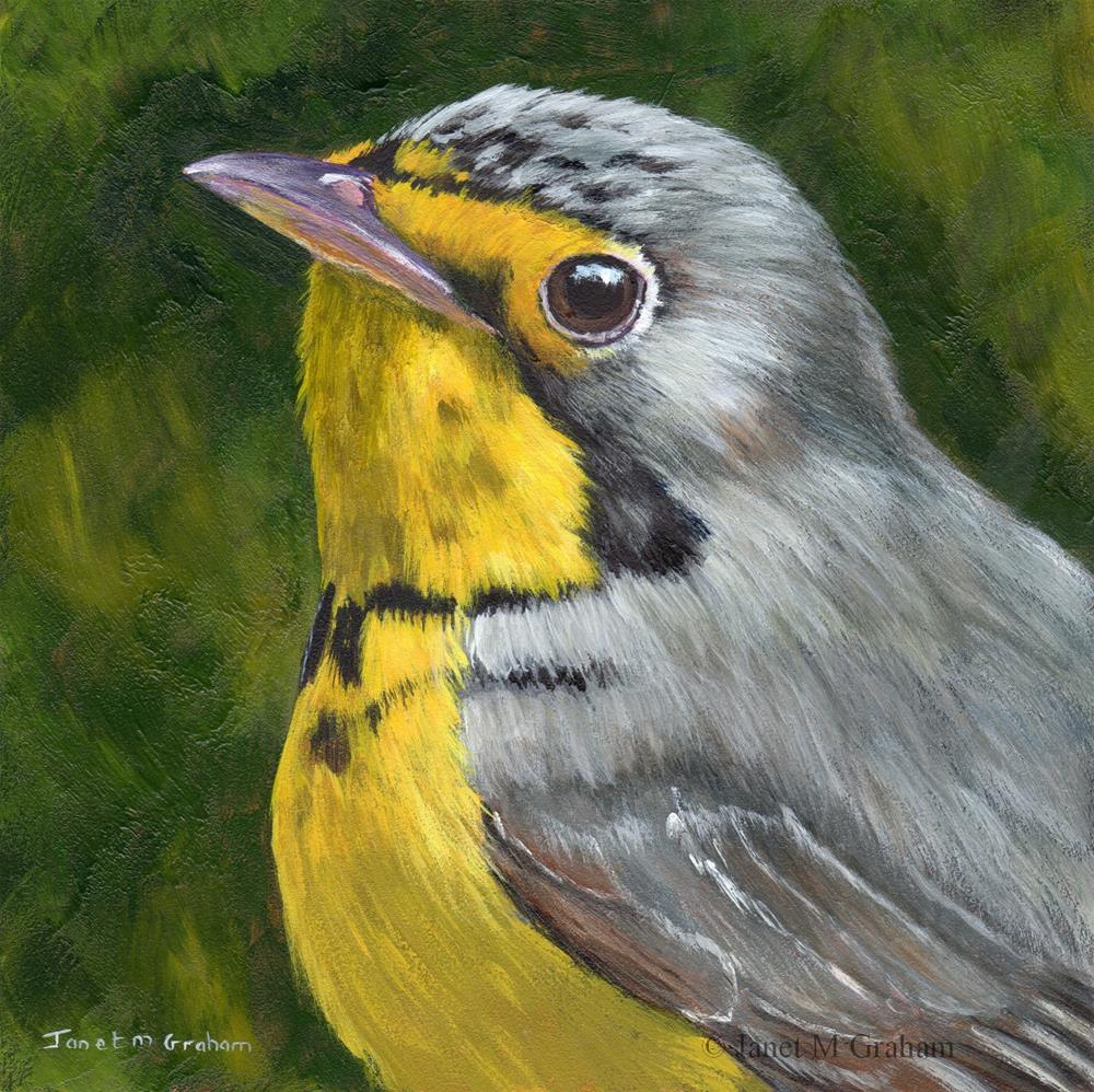 """Canada Warbler"" original fine art by Janet Graham"
