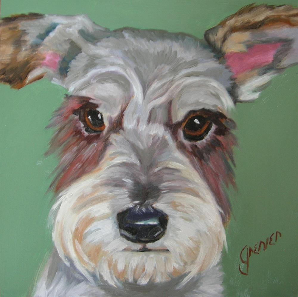 """Little Rescue Schnauzer"" original fine art by jean grenier"