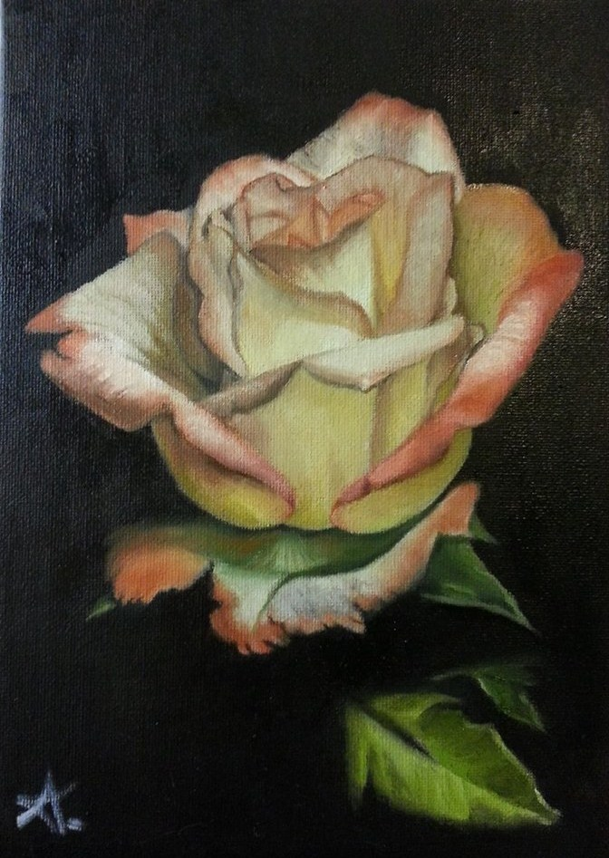 """open rose 82"" original fine art by Konstantia Karletsa"