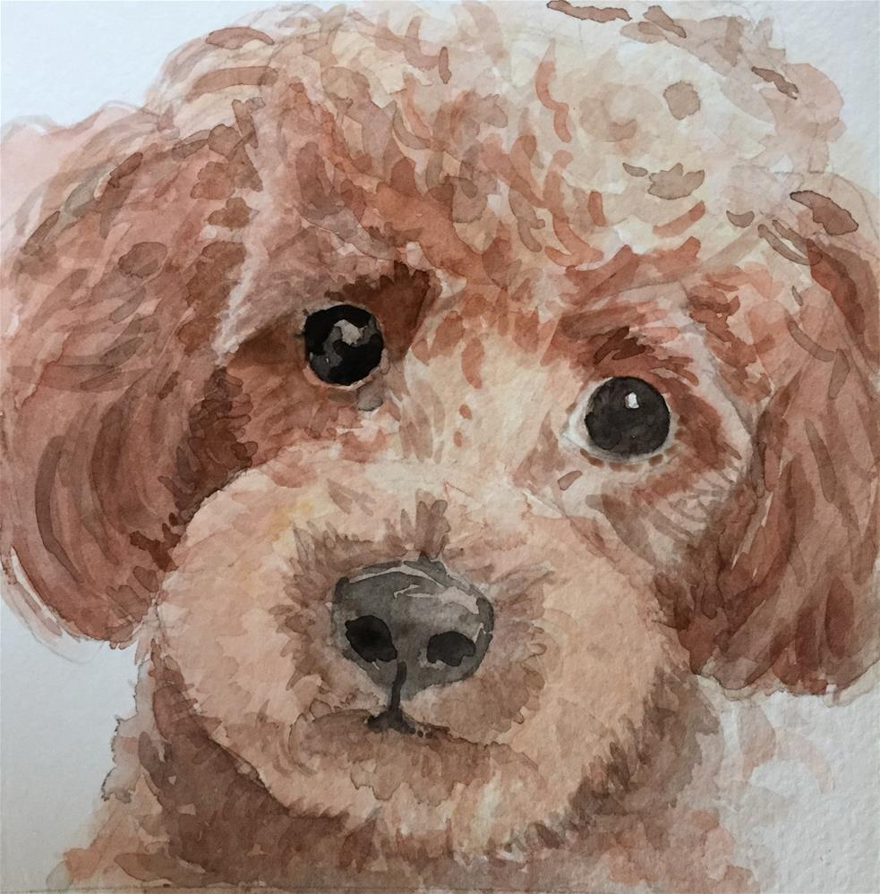 """Max the Red Toy Poodle"" original fine art by Cindy McDonough"
