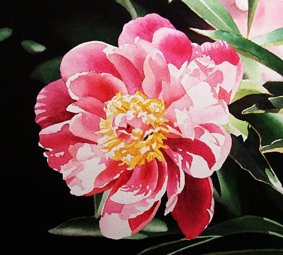 """Pink Peony III & DVD Sale ends tomorrow night."" original fine art by Jacqueline Gnott, TWSA, WHS"