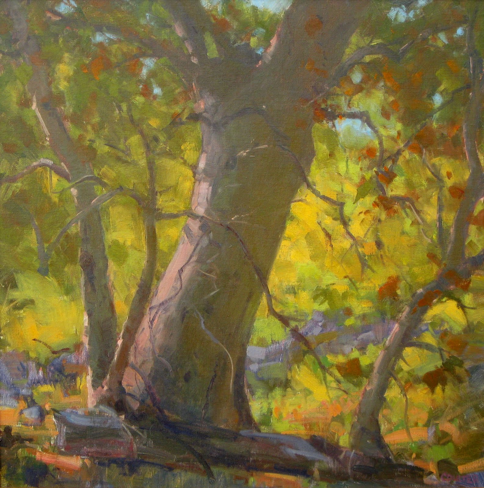 """""""SYCAMORE"""" original fine art by James Coulter"""