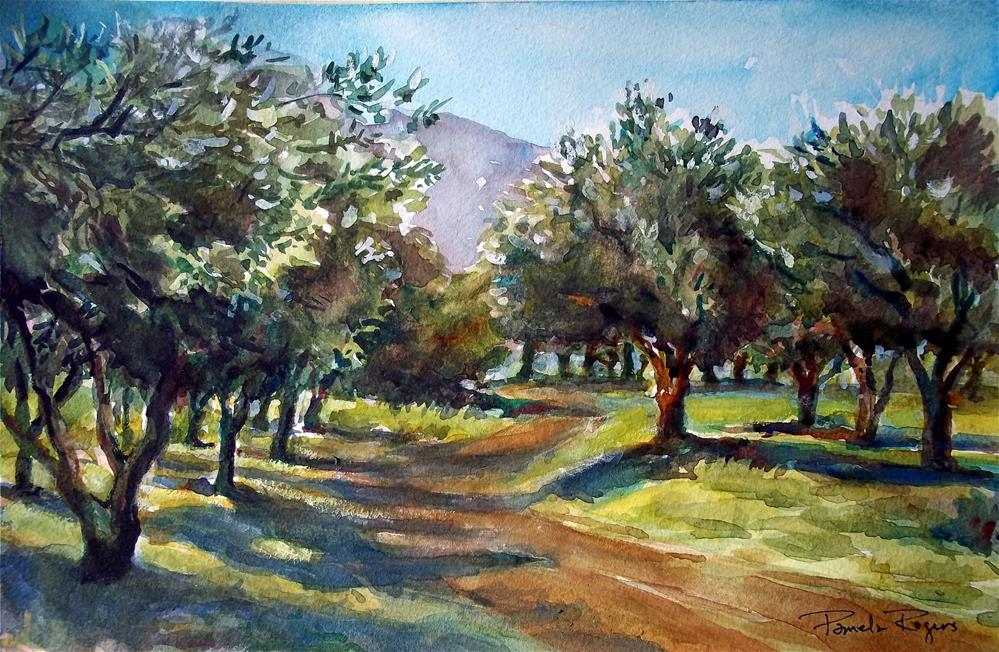 """Path through the Olive Trees"" original fine art by Pamela Jane Rogers"
