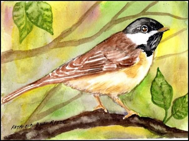 """""""Chickadee!"""" original fine art by Patricia Ann Rizzo"""