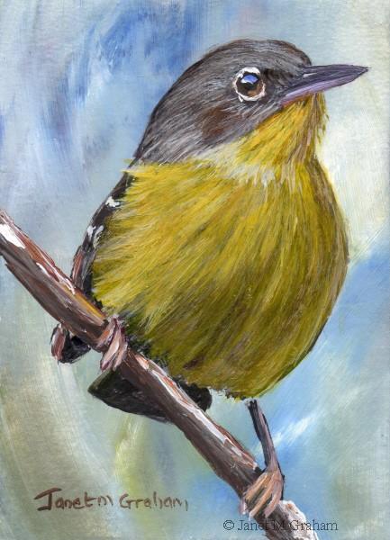 """Magnolia Warbler ACEO"" original fine art by Janet Graham"