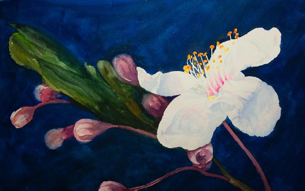 """Whit Blossom"" original fine art by Cory Behara"