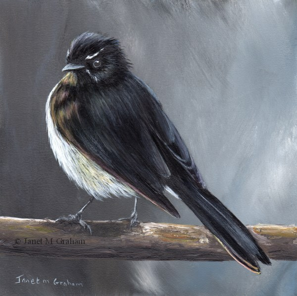 """Willie Wagtail"" original fine art by Janet Graham"
