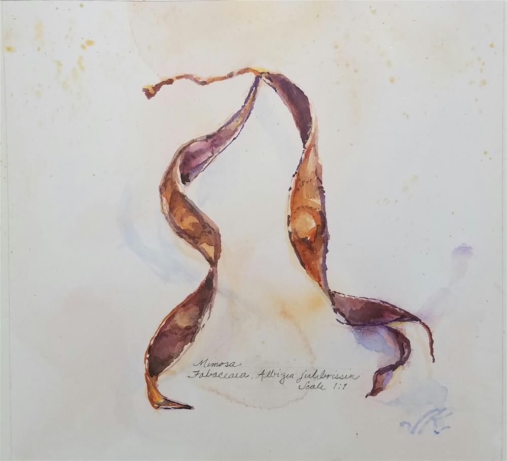"""""""Mimosa Seed pod"""" original fine art by Jean Krueger"""