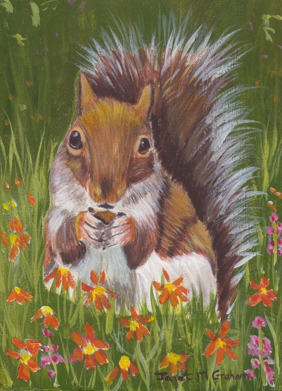 """Squirrel Amongst the flowers ACEO"" original fine art by Janet Graham"