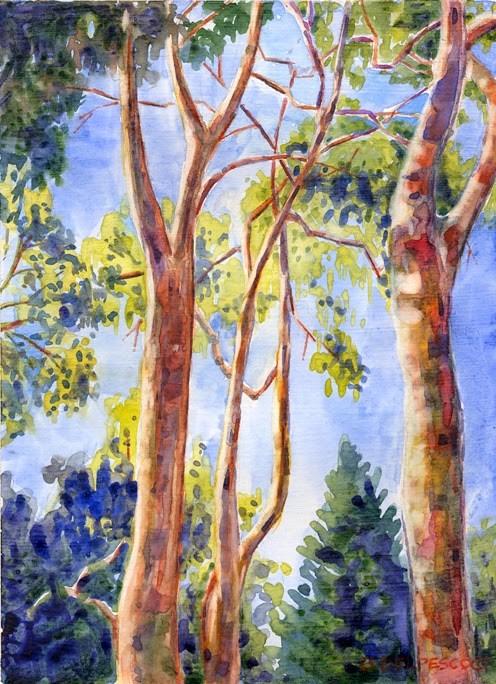 """Watercolor: Eucalyptus Study (& photos from the Sierra Madre Art Fair)"" original fine art by Belinda Del Pesco"