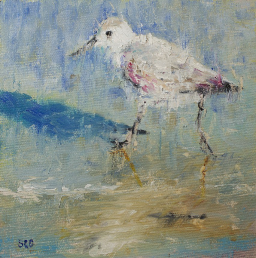 """""""Dashing Sandpiper"""" original fine art by Sue Churchgrant"""