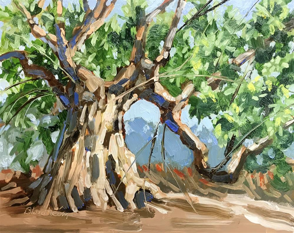 """Ancient Olive Tree"" original fine art by Linda Blondheim"