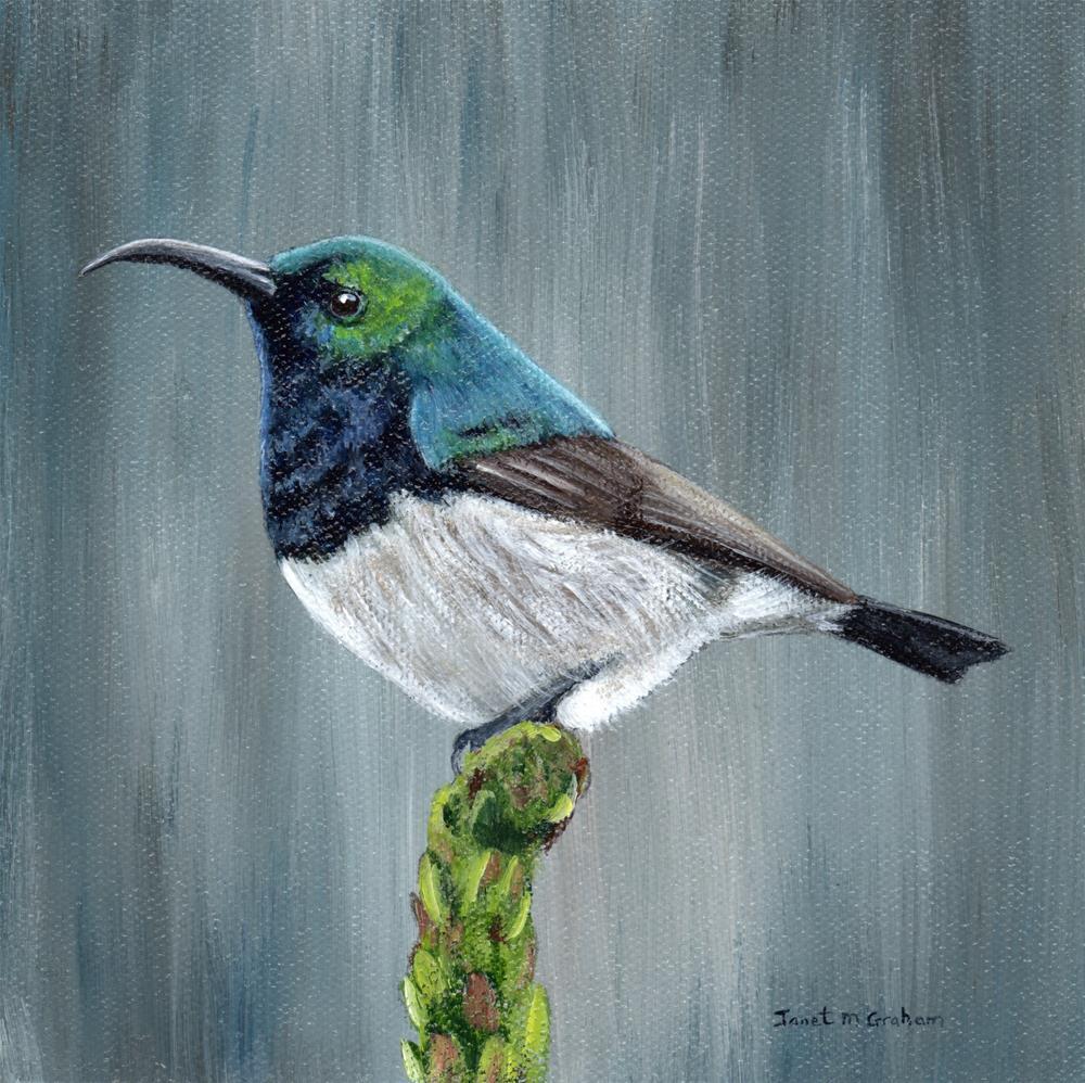 """""""White Bellied Sunbird"""" original fine art by Janet Graham"""